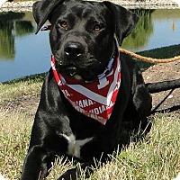 Adopt A Pet :: Jax - Lewisville, IN