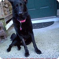 Adopt A Pet :: Holly - Garwood, NJ