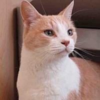 Adopt A Pet :: PUMPKIN - Fairfield, CA