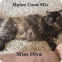 Adopt A Pet :: Miss Diva - Bentonville, AR