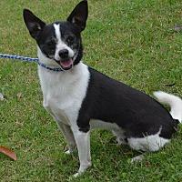Adopt A Pet :: Kibbe - Brunswick, ME