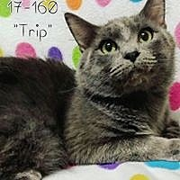 Adopt A Pet :: Trip - Cannelton, IN