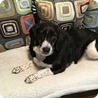 Adopt A Pet :: Betty - Lebanon, ME