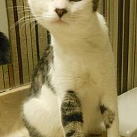 Adopt A Pet :: Emily - Reston, VA