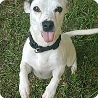 Adopt A Pet :: MEL - Portsmouth, NH
