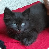 Adopt A Pet :: Binx - Duluth, GA