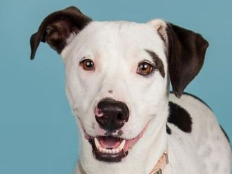 Mixed Breed (Large) Mix Dog for adoption in Longmont, Colorado - Valentina