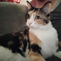 Adopt A Pet :: Uno - Sacramento, CA
