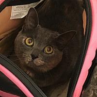Adopt A Pet :: Jezebel - Covington, KY