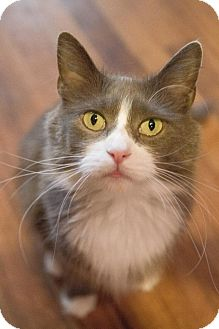 Domestic Longhair Cat for adoption in Byron Center, Michigan - Ginnifer