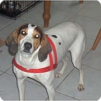 Adopt A Pet :: Dutches - Clayton, OH