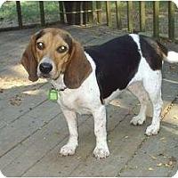 Adopt A Pet :: River - cedar grove, IN