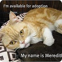 Adopt A Pet :: Meredith - Modesto, CA