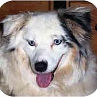 Adopt A Pet :: Dali - Mesa, AZ