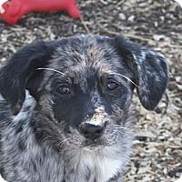 Adopt A Pet :: Lilah - PENDING - kennebunkport, ME