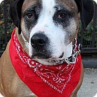 Adopt A Pet :: Libby - Staten Island, NY