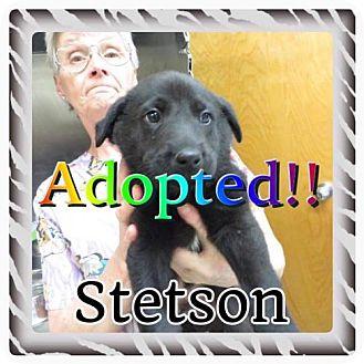 Labrador Retriever Mix Puppy for adoption in Kenmore, New York - Stetson