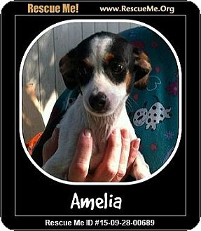Terrier (Unknown Type, Small) Mix Dog for adoption in Saddle Brook, New Jersey - Amelia