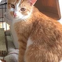 Adopt A Pet :: Petey - Horsham, PA