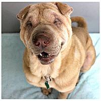 Adopt A Pet :: Doris - Forked River, NJ