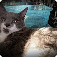 Adopt A Pet :: Dixon - Fairborn, OH