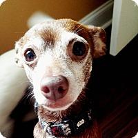 Adopt A Pet :: Jake - Marrero, LA