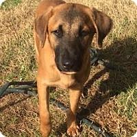 Adopt A Pet :: Mork - San Antonio, TX