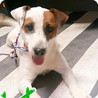 Adopt A Pet :: Maynard - Odessa, TX