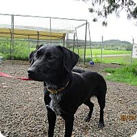 Adopt A Pet :: Lolly - Tillamook, OR