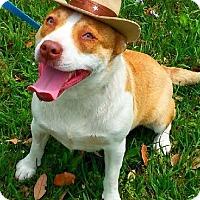 Adopt A Pet :: Francis - Simsbury, CT
