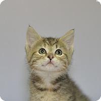 Adopt A Pet :: Joplin - Medina, OH