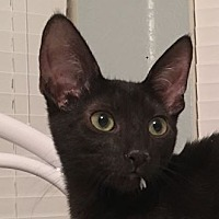 Adopt A Pet :: Hammy - Mesa, AZ