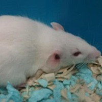 Adopt A Pet :: Ted - Fall River, MA