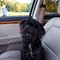 Adopt A Pet :: Wicket - Germantown, OH