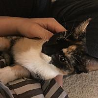 Adopt A Pet :: Aida - Glenwood, MN