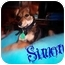 Photo 1 - Miniature Pinscher/Chihuahua Mix Puppy for adoption in Watertown, South Dakota - Simone