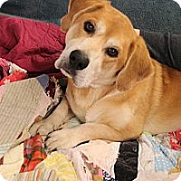 Adopt A Pet :: Levi - Hagerstown, MD