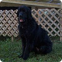 Adopt A Pet :: Jett - Lee's Summit, MO