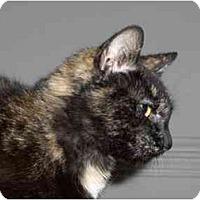 Adopt A Pet :: Tess - Richmond, VA