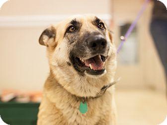 German Shepherd Dog Mix Dog for adoption in Dallas, Texas - Sandra