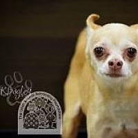 Adopt A Pet :: Sammy - Salt Lake City, UT