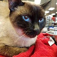 Adopt A Pet :: Bo - Tucson, AZ
