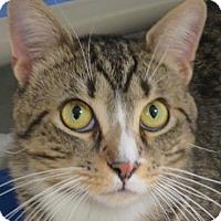 Adopt A Pet :: Donnie - Norwalk, CT
