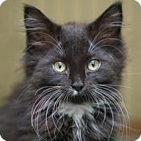 Adopt A Pet :: Sasha - Alameda, CA