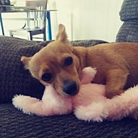 Adopt A Pet :: Jaina - Los Banos, CA