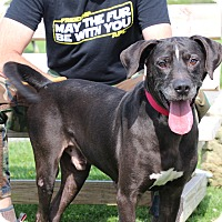Adopt A Pet :: Cooper-Prison Graduate - Elyria, OH