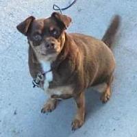 Adopt A Pet :: Minnie - West Allis, WI