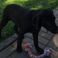 Adopt A Pet :: Remo - DeSoto, IA