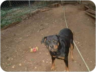 Rottweiler Mix Dog for adoption in McDonough, Georgia - Pippy