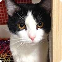 Adopt A Pet :: Rolo - Green Bay, WI